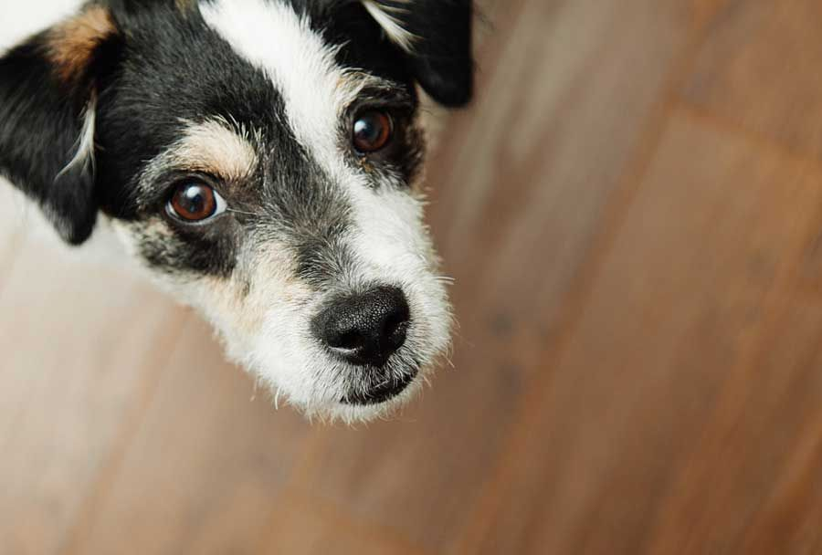 Pet Custody: Who gets the pets during a separation?